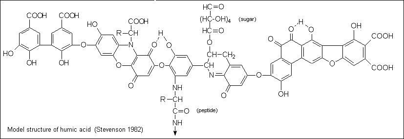 Можлива структурна формула фрагмента гуминовой кислоти
